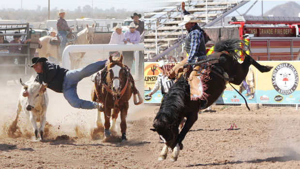 rodeo cowboy on their horses trying to lasso a cattle