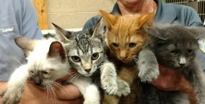 and Kittens