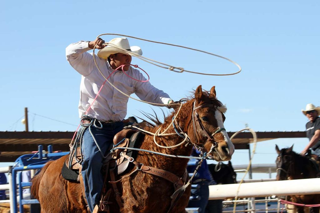 cowboy swinging rope in the air on the horse